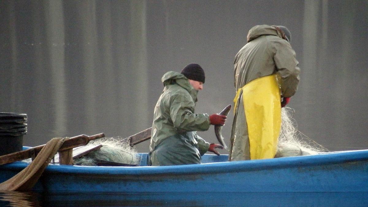 Rybacy łąwiący ryby sieciami