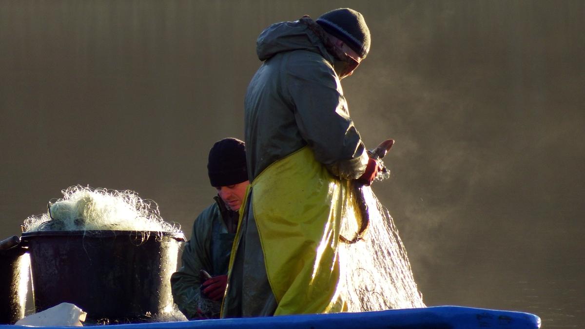 Rybacy łowiący ryby sieciami