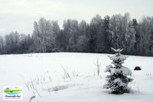 zima, łąka, las, przytuły, mazury