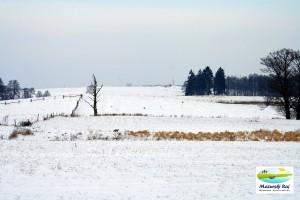 zima, pola, śnieg, drzewa, lisek