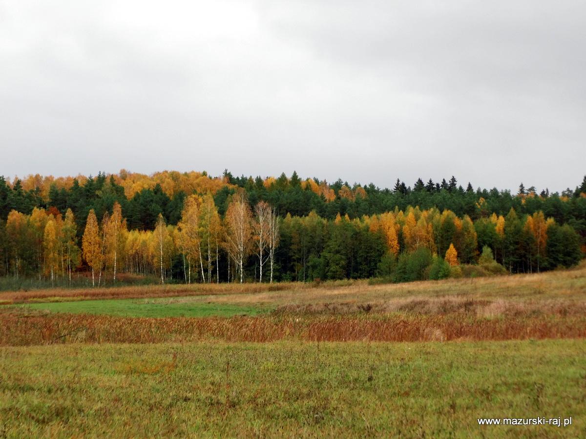 jesień, kuty, las, mazury, łąki
