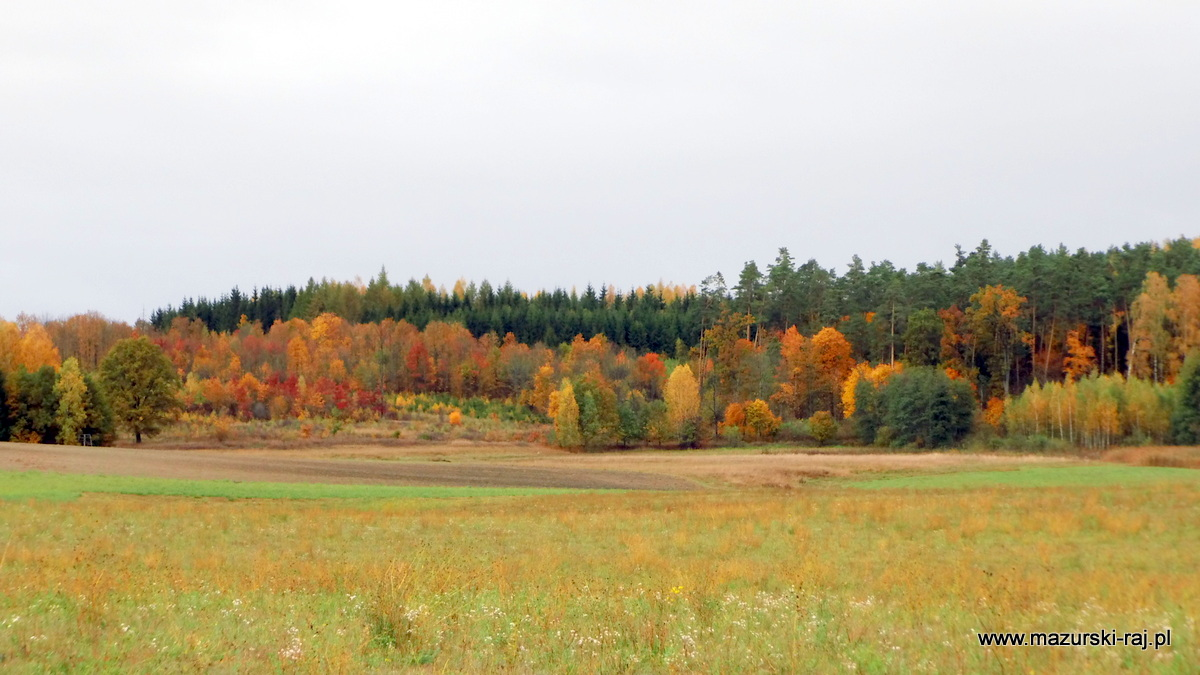 jesień, mazury, las, kuty