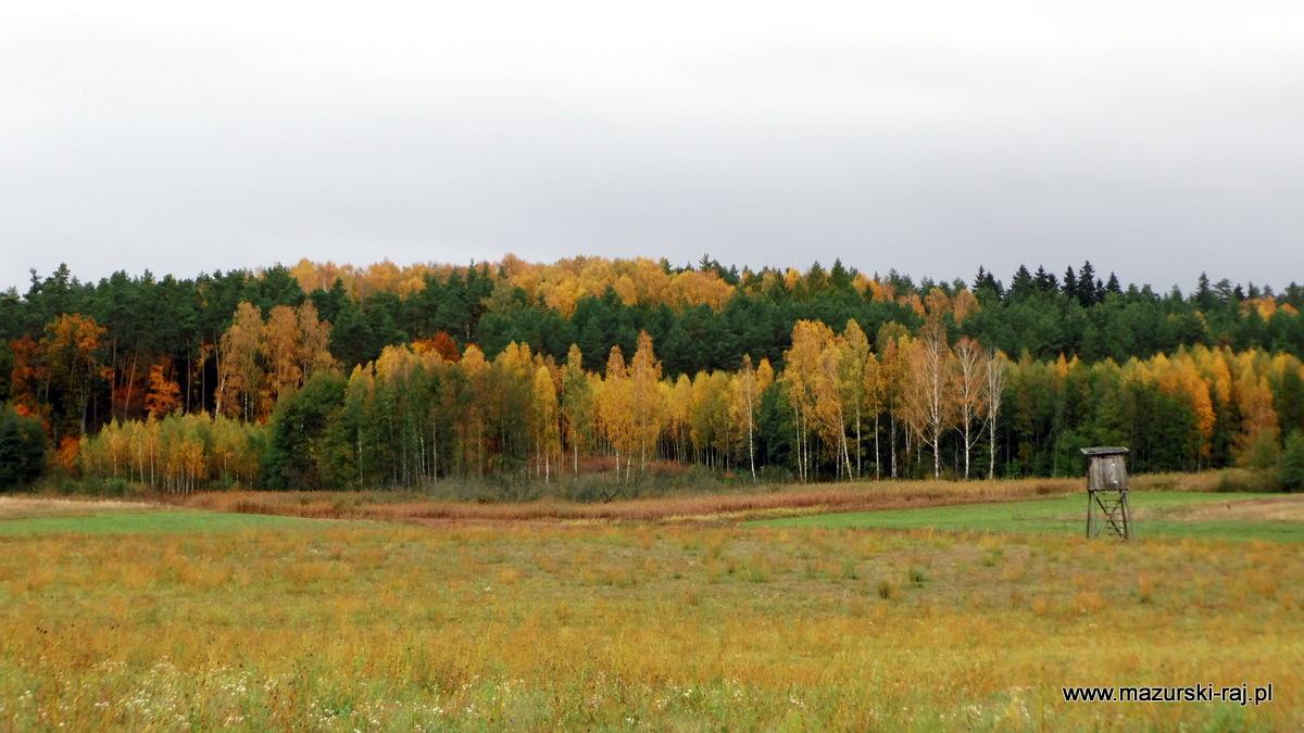 jesień, mazury, las, łąki, kuty, ambonka