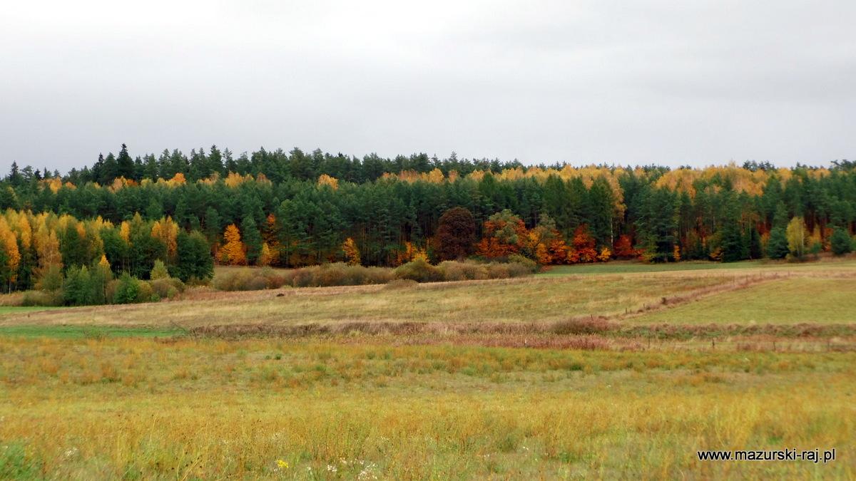 jesień, mazury, kuty, łąki, las, torfowisko