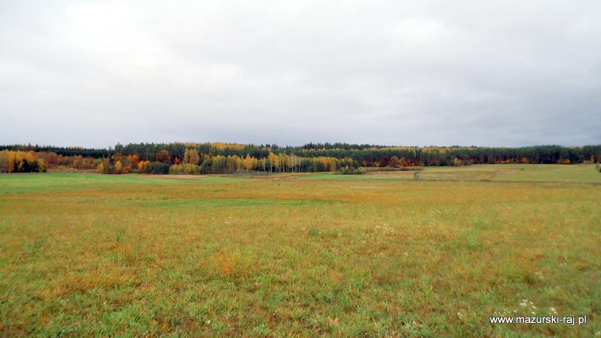 jesień, mazury, łąki, las, kuty