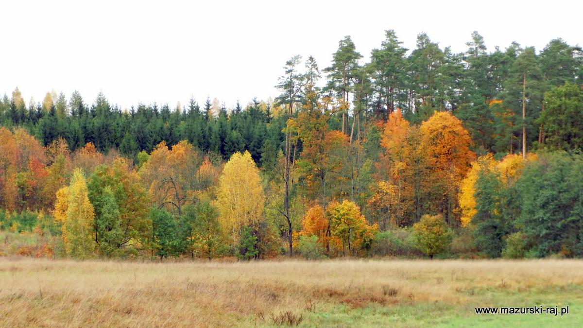 jesień, mazury, las, zagajnik, łąka, kuty, przytuły
