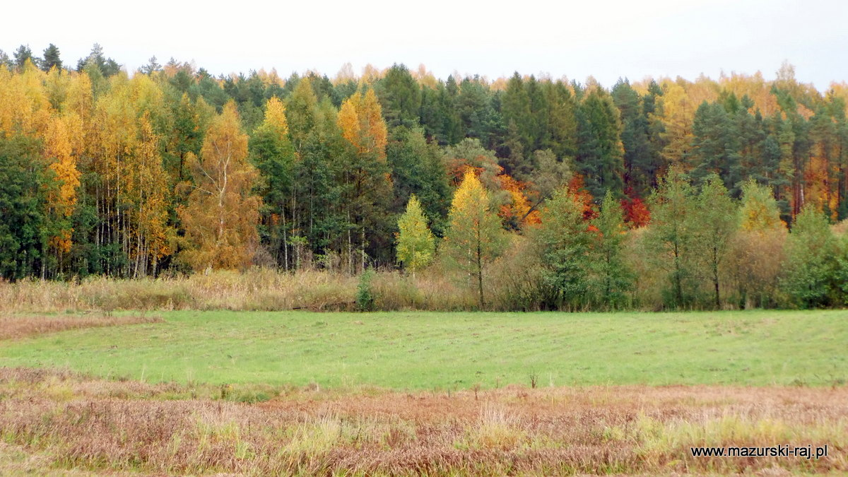 jesień, kuty, las, mazury