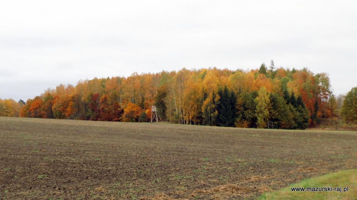 jesień, mazury, las, ambona, rola, kuty
