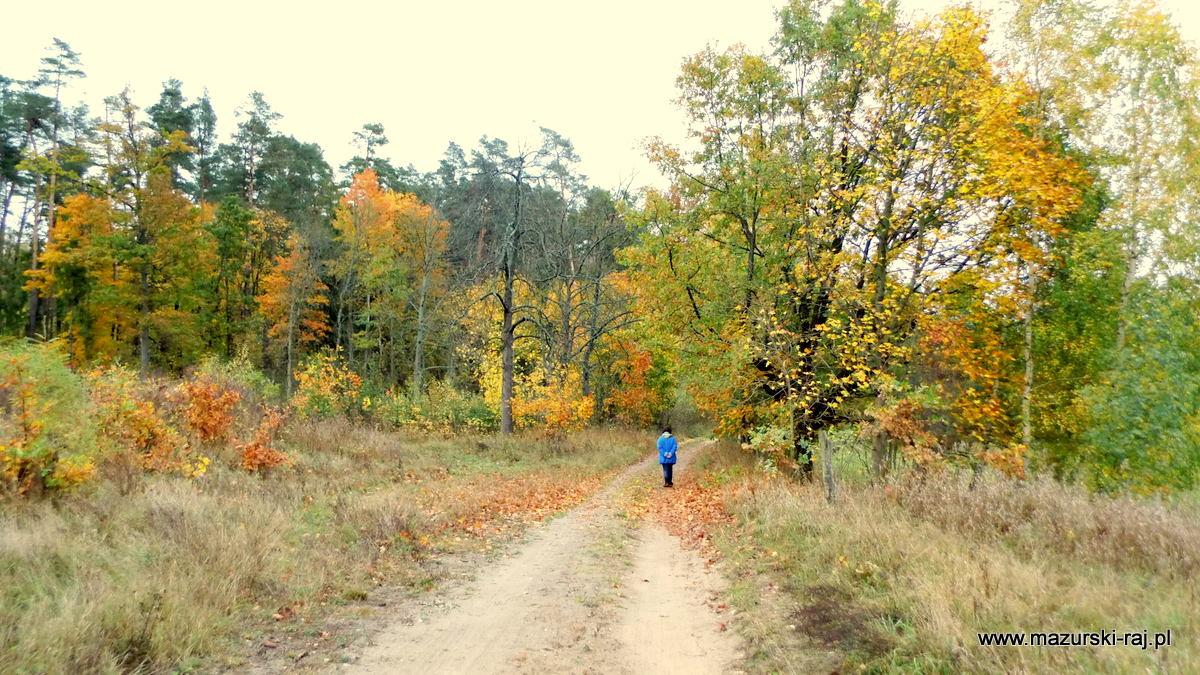 Jesienny las, droga, turysta idący drogą w niebieskiej kurtce