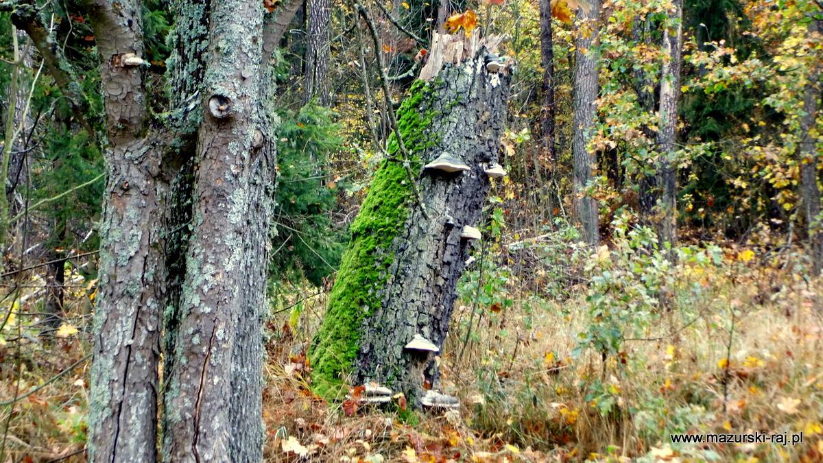 jesień, lasy, mazury, kuty, pozezdrze
