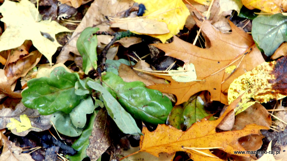 jesień, lasy, mazury, kuty, pozezdrze, liście