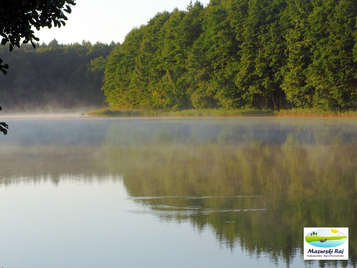 Widok na wodę i las