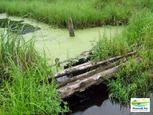 bobrowiska, ścieżka dydaktyczna, pozezdrze