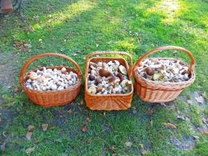 grzyby, kołpaki, turki, las, mazury