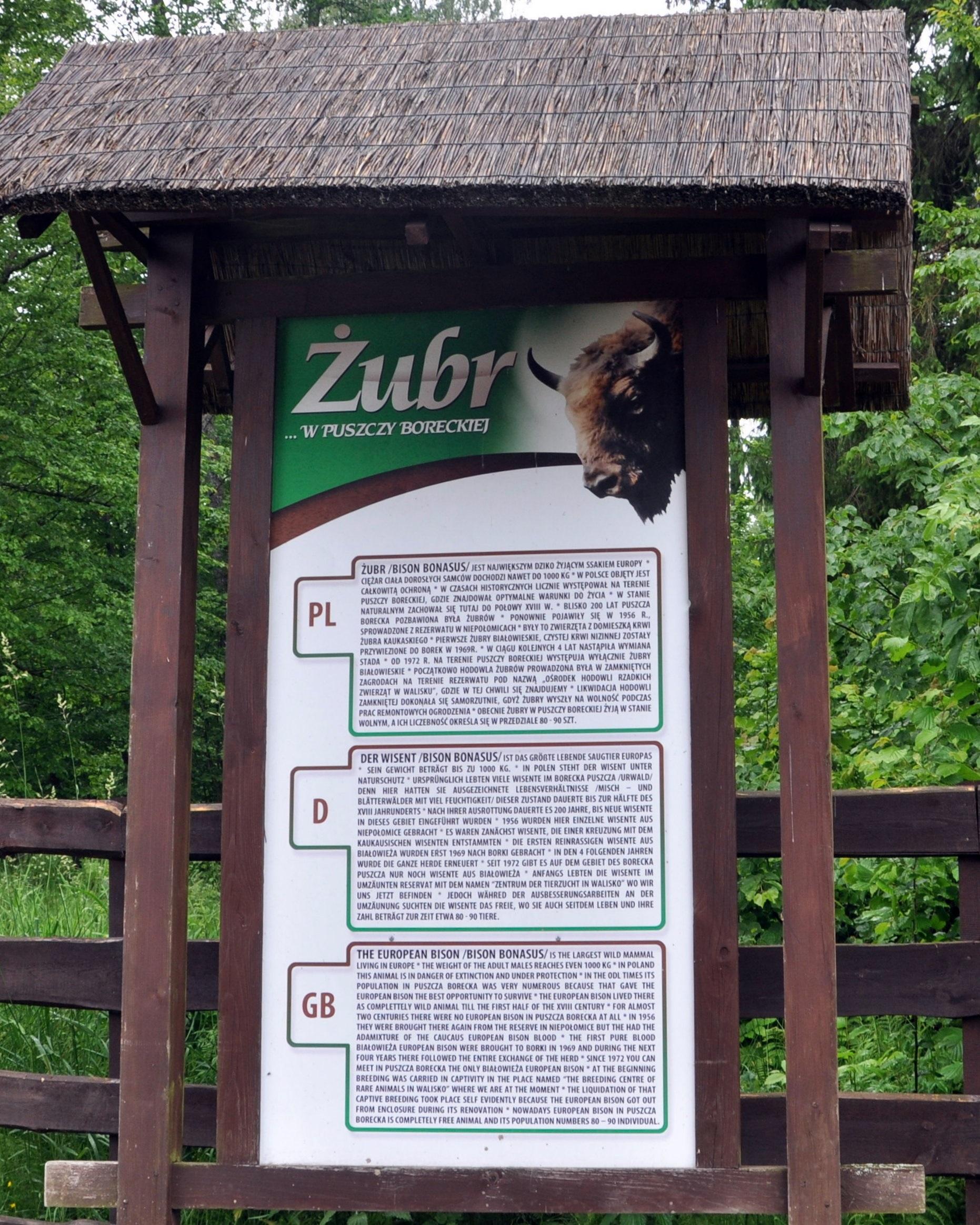 żubry, zwierzęta, wolisko, pokaz żubrów, stacja hodowli zubrów, mazury, żubry, kuty,