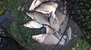 ryby, czarna kuta, wędkarstwo, połów