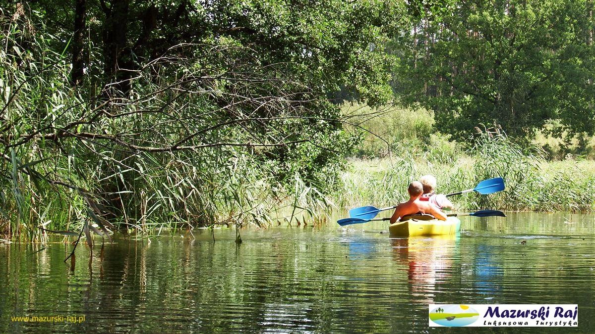 kajak, rzeka, las
